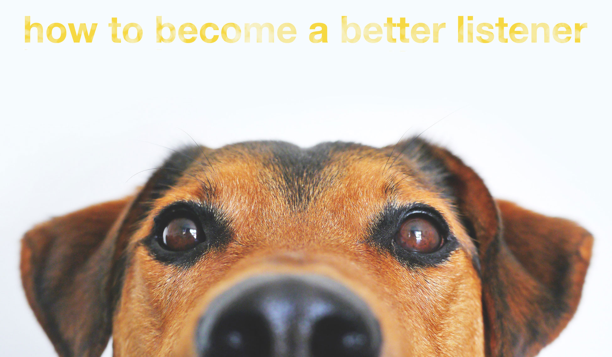 cute dog under type that reads how to become a better listener